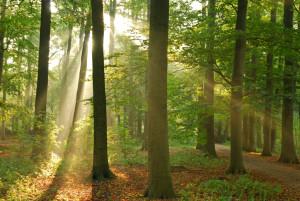 Das Verbrennen fossiler Brennstoffe setzt Schadstoffe frei, welche die Umwelt belasten.